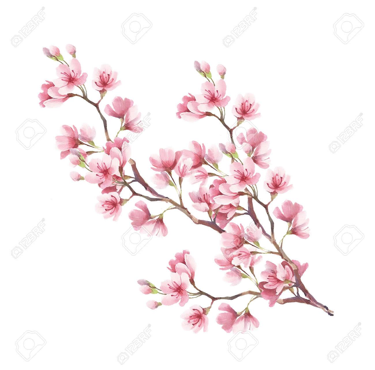73659265-branche-de-fleurs-de-cerisier-dessin-à-la-main-de-l-aquarelle-.jpg